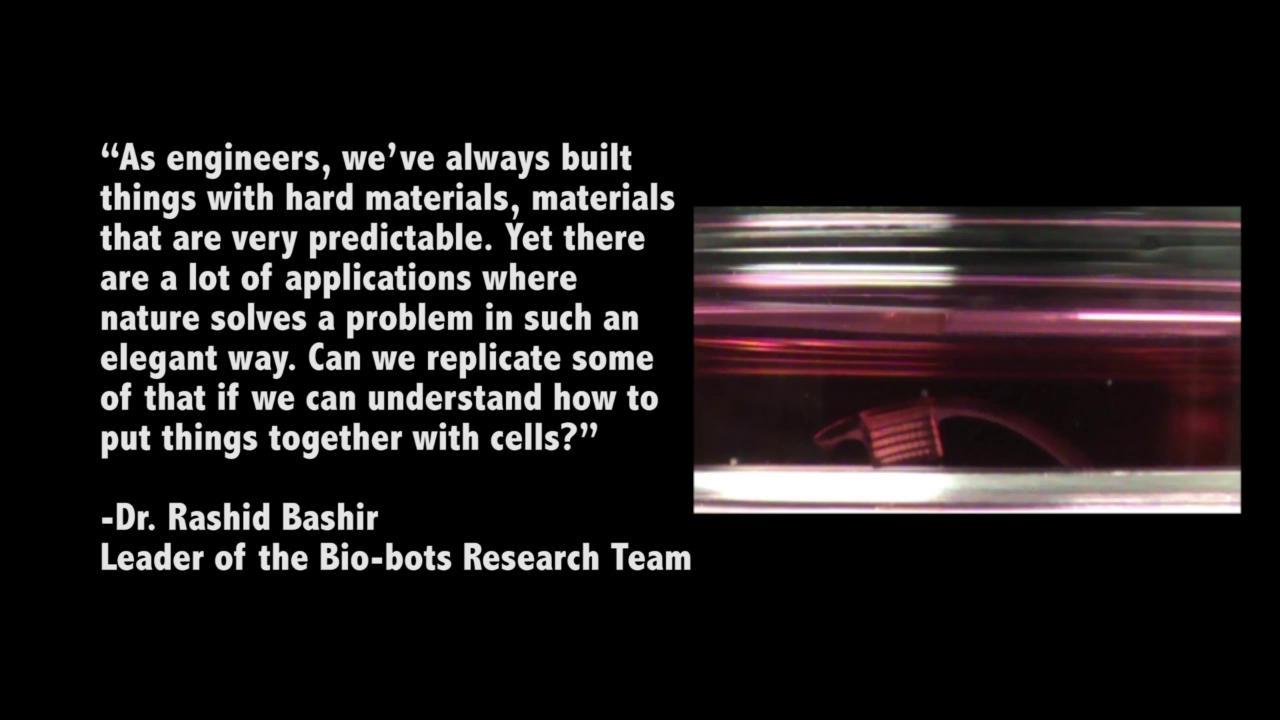 Bio-Bots: Cells power biological machines