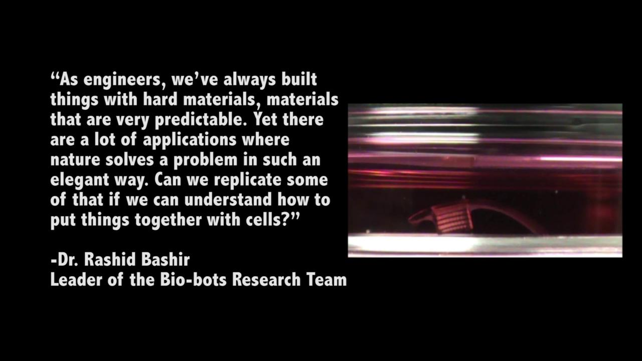 Bio-Bots: Cells power biological machines